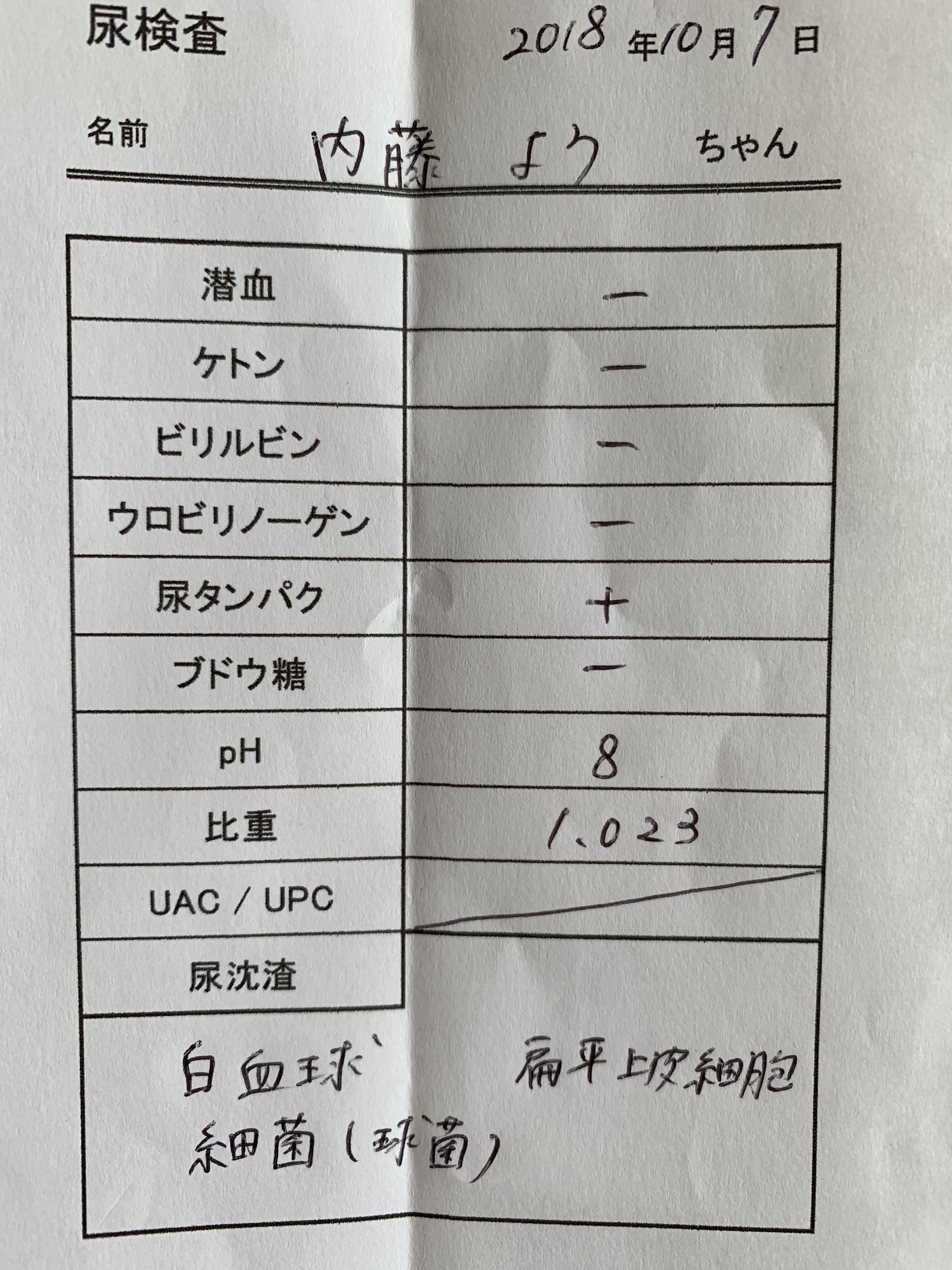 細菌 尿 検査